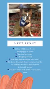 Meet Penny