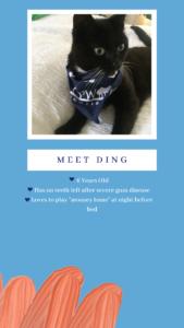 Meet Ding